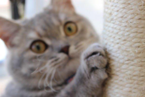 猫の爪とぎに関するしつけ