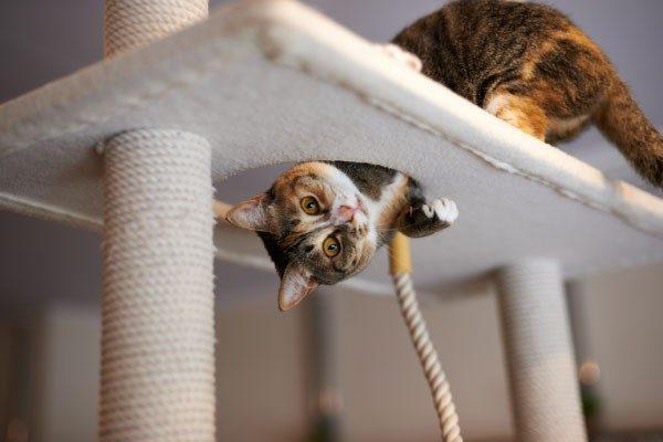 猫のストレス解消のコツ