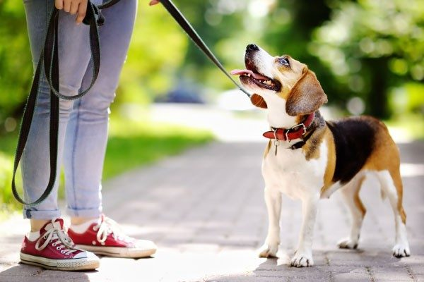 犬との主従関係を守るしつけ方