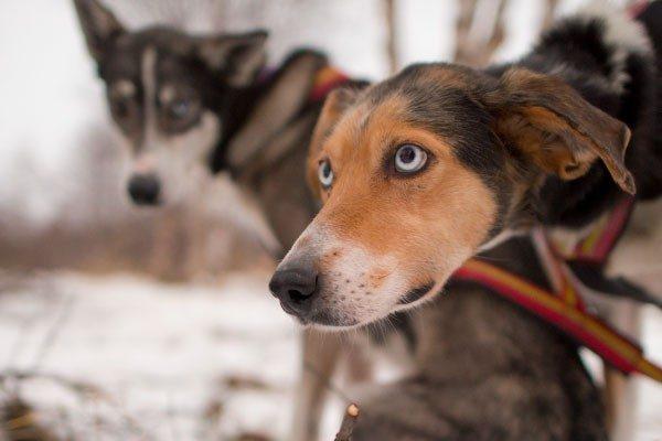 犬がかかる目の病気について