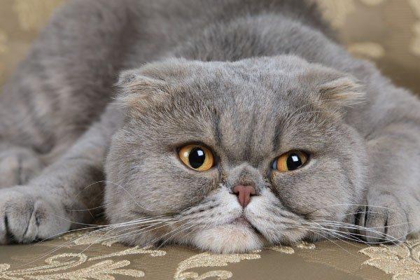 猫の目の病気の症状