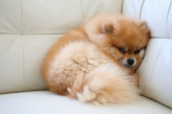 犬の下痢、嘔吐でわかる病気について
