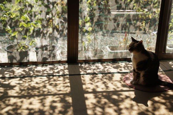 猫は何日留守番させるのが限界?留守番のストレスについて