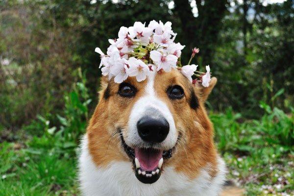 春の健康管理【犬】