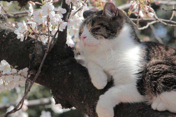 春の健康管理【猫】