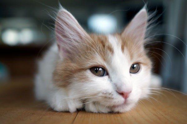 腎不全から愛猫を守るために