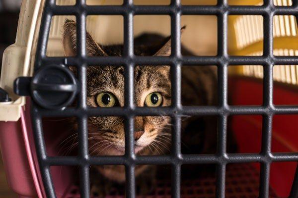 猫がキャリーに入ってくれない!そんな時どうする?