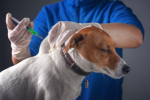混合ワクチンは毎年受けるべき?