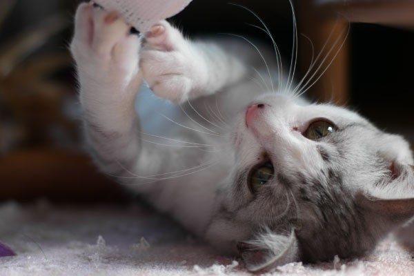 猫のゴロゴロはメンタルの癒し効果だけでなく、外科治療にも!