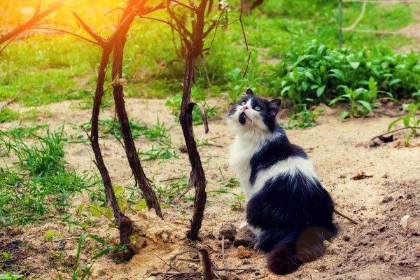 2月22日「猫の日」にまつわるトリビア