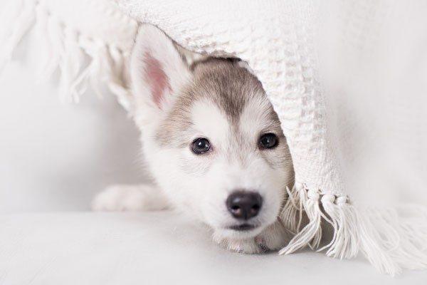 犬だって寒いんです!冬に気を付けたいこと