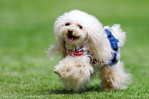 犬に服を着せる派、着せない派。それぞれの言い分とは!