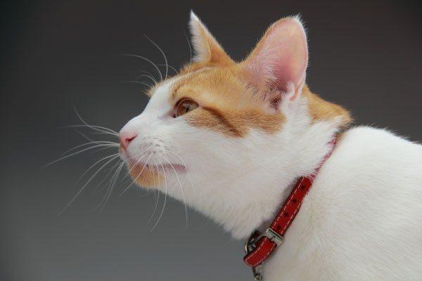 猫のヒゲは高感度センサー