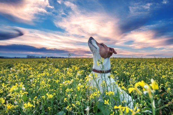 犬は色を識別できるの?犬の色の世界を覗いてみよう!