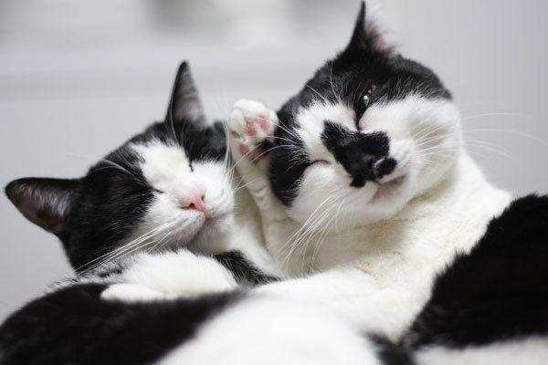猫のオスとメスには違いがある
