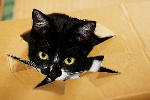猫が喜ぶお部屋とおもちゃ作り!猫と仲良く楽しく暮らそう