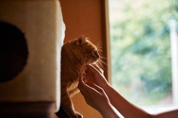 声やしぐさ、行動から探る猫の本当の気持ち