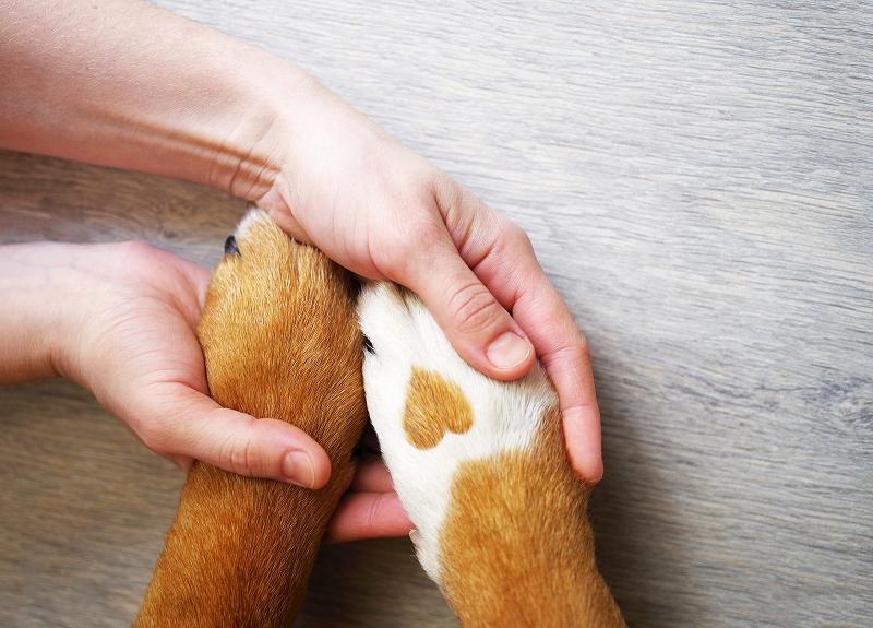 ペットを本当に愛してる…