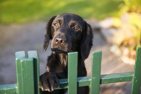 「犬の災害対策」いますぐ準備したいこと・やっておきたいこと