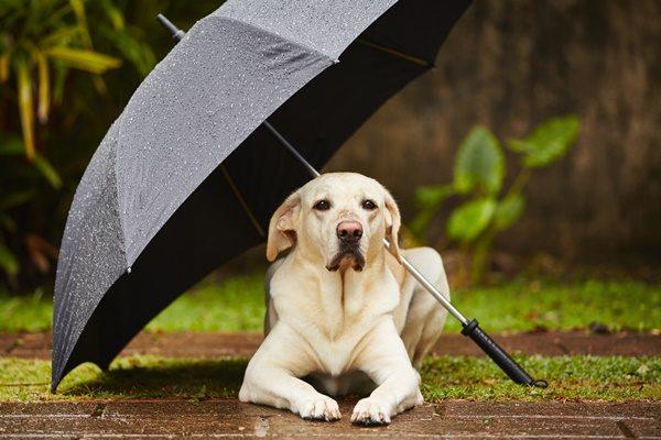 愛犬と一緒に雨の日も楽しく散歩!快適に過ごすコツと注意点