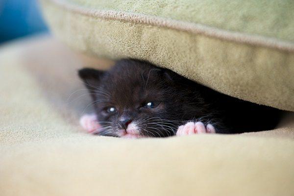 「猫の災害対策」いますぐ準備したいこと・やっておきたいこと
