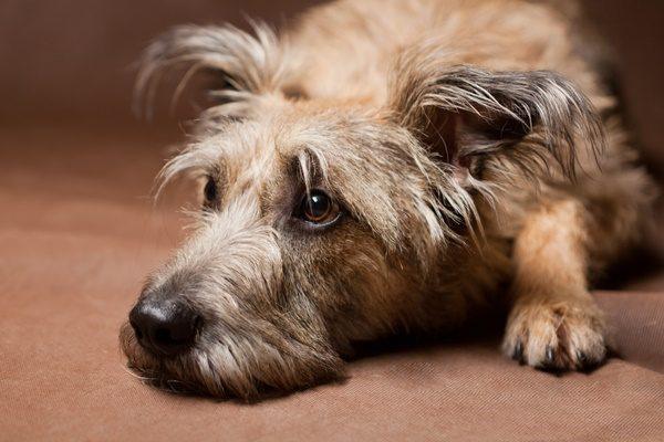 犬が雷や花火の大きな音を怖がる!安心させる方法や予防方法は?