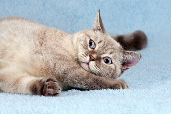 ヒゲの向きで猫の気持ちがわかる?猫のヒゲの秘密とは