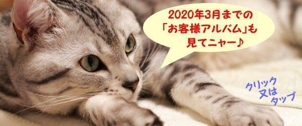 2020.3お客様アルバム