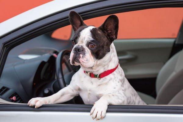 愛犬と日帰りドライブお出かけ!楽しむ方法とは?準備や持ち物も