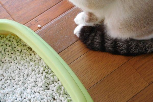 猫の快適トイレとは?猫も飼い主さんも大満足のトイレを目指そう