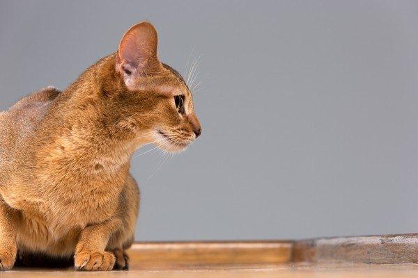 猫のトイレお悩み解決!快適トイレで猫も飼い主さんもすっきり