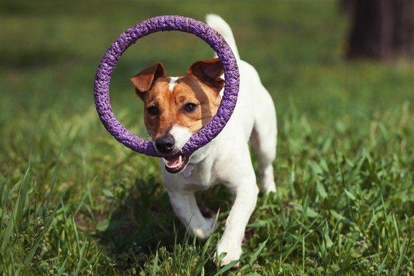 犬と遊ぼう!家の中でできる楽しいゲームでコミュニケーション