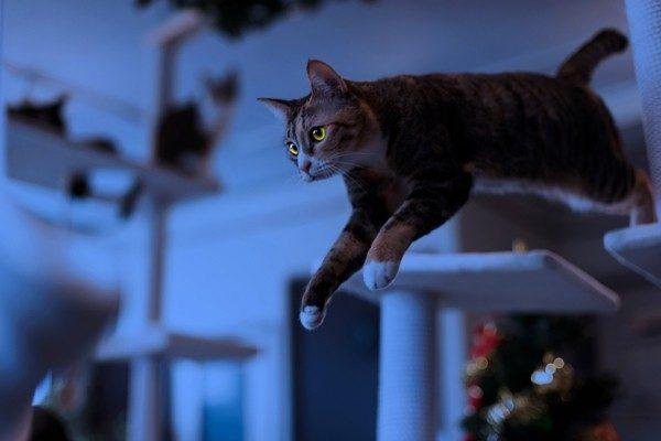 夜中の運動会、朝の大騒ぎ。ちょっと困った猫の行動には意味がある!