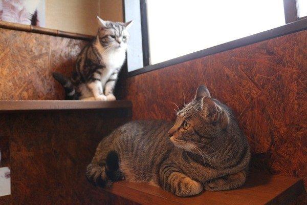 猫の多頭飼い「平和に仲良く暮らす」ポイントは?
