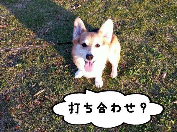 日本ペットシッターサービス神戸西店amo オンライン相談利用規約  日本ペットシッターサービス神戸西店amo(以下当店とする)が実施するオンライン相談(WEBカメラを含む通信による相談)を利用するためには、この利用規約への同意が必要となります。 なお、第4条により利用を申し込んだ場合は、この利用規約に同意したものとみなします。  第1条(目的)  当店サービスご利用の前に行う「事前の打ち合わせ」のためお客様のご自宅へ伺う必要がありますが、新型コロナウィルス感染症の感染拡大防止のため、及び打ち合わせによる滞在時間の短縮を図るため、ご利用内容の説明、お見積り、ご利用にあたっての質疑応答の機会を提供します。  第2条(対象者) オンライン相談を利用できるのは、次の全ての条件を満たす方です。 (1)ペットシッターのご利用を検討されている方、登録済の方で次回ご利用内容のご相談をご希望の方 (2)メールアドレスを所有している方 (3)WEBカメラによる通信が可能な端末(スマートフォン、タブレット、PC等)を所有し、第3条の必要なアプリケーションソフトのダウンロードが可能である方  第3条(通信に必要なアプリケーション) 本サービスでは、いずれかのオンライン会議サービスを利用いたします。 必要なアプリケーションのダウンロードをお願いしています。 Zoom Cisco Webex Meetings  第4条(利用申し込み等) (1)オンライン相談は、1回あたり30分までとし、原則として、前日までに予約が完了した方が利用できます。なお、サービスご利用前に行う事前の打ち合わせは必須であるため、ご利用予定日より約10日前のご相談を推奨いたします。利用申し込みは、お客様が当店問い合わせフォームにて、次の事項をご記入後送信いただくことにより、行っていただきます。ただし、2回目以降についての利用申し込みは、オンライン相談の際にも行うことができます。  ①氏名(フリガナ) ②電話番号 ③住所 ④メールアドレス ⑤ご希望の連絡方法については、「メールアドレス」をご希望ください。 ⑥打ち合わせ第1希望日・第2希望日(営業時間9:00~20:00の間で、第2希望までご入力ください) ⑦ご利用希望のアプリケーション(Cisco Webex Meetings利用希望の方は、「その他」のところに「Ciso Webex Meetings希望」とご記入ください。記入の無い場合はZoomにて実施いたします。) (2)予約申込みを受けて、当店で日程調整を行い、メールにて決定したオンライン相談の実施日時をご連絡します。 (3)キャンセルや予約変更の場合は、お電話及びメールにてご連絡をお願いします。なお、連絡がないまま(2)の実施日時を15分経過した場合は、キャンセルとみなします。連絡がないままキャンセルされた場合は、今後のオンライン相談の利用をお断りする場合があります。  第5条(オンライン相談の実施) (1)使用する端末のWEBカメラ・スピーカー・マイクを使用できる状態にしてください。使用機器の充電をお願いします。 (2)オンライン相談の実施日時5分前までに、招待メールを送付します。メール本文のURLをクリックしてください。 (パソコンを利用する場合は、メールソフトもパソコンにインストールしている必要があります。) (3)ブラウザが起動し、当店の担当者と通信ができることを確認してください。  第6条(利用の記録等) (1)当店は、オンライン相談の運用管理、利用状況の把握及び利用者の利便性向上及びシッター申込手続きのために、オンライン職業相談の利用時間帯、サイト等へのアクセス履歴及び利用者が使用した端末装置、相談内容等を記録することがあります。 (2)当店は前項の定めにより記録した情報は公開いたしません。ただし、ご本人の同意がある場合、法令に基づき捜査機関等から開示又は提供を要求された場合はこの限りではありません。  第7条(個人情報保護) お客様の情報は、当店へのお問い合わせ時や当店サービスお申込み時と同様、プライバシーポリシーに従って個人情報の保護に万全を尽くします。  第8条(免責事項) (1)オンライン相談の利用に関し、利用者が使用した通信に関する環境(端末、回線、ソフト等の一切を含む)に起因して発生した利用者の損害及び利用者が第三者に与えた被害について、当店は一切責任を負わず、損害賠償する義務はないものとします。 (2)通常講ずべきセキュリティ対策を講じても防止できない外部からのサイバー攻撃や災害、停電など、当店に帰すべき事由によらずお客様に損害が発生しても当店は一切責任を負わず、損害賠償の義務はないものとします。  第9条(本規約の違反) お客様が、本規約に違反した