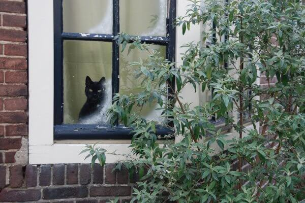 猫のお留守番で気を付けたいことって?