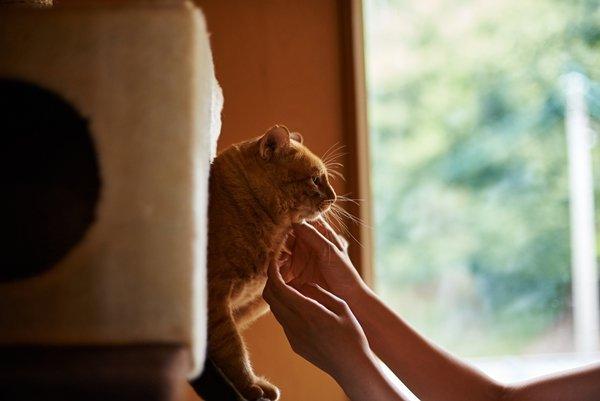 猫との引っ越し ストレスをかけないことが大切!