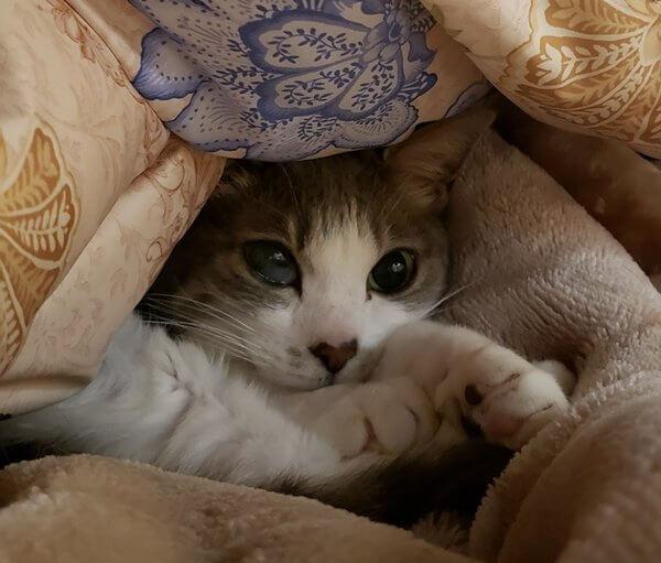 当店の看板猫紹介1
