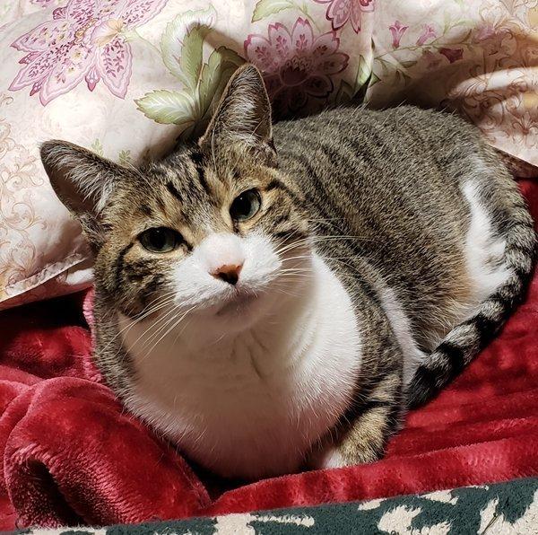 当店の看板猫2