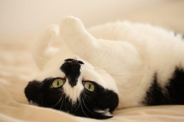 ぽっちゃり?かわいい?猫の肥満に注意!