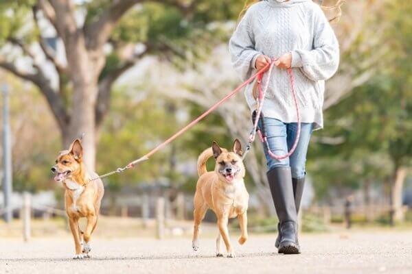 愛犬も飼い主さんも、散歩をたくさん楽しもう!