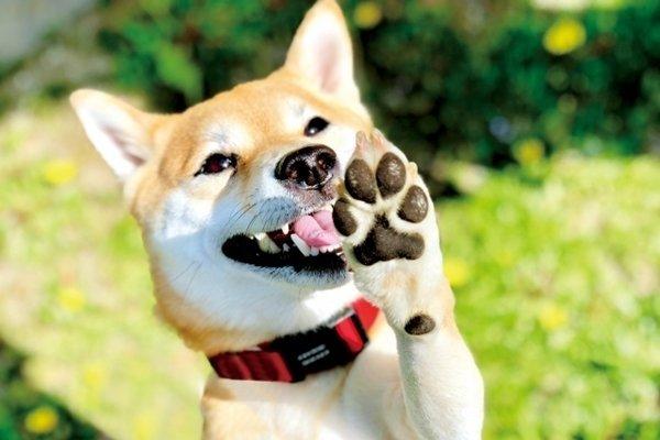 愛犬の肉球を大切に!知っておきたい役割と注意点