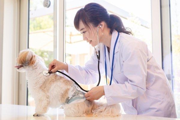 犬の健康と長生きのために定期的な健康診断を受けよう!