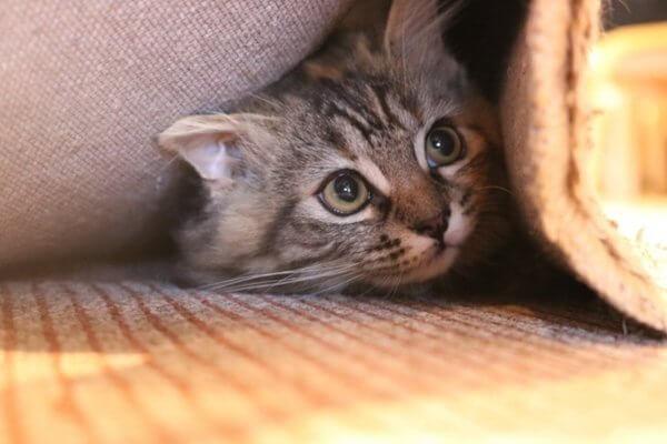 怖がり猫と仲良くしたい!コツはある?