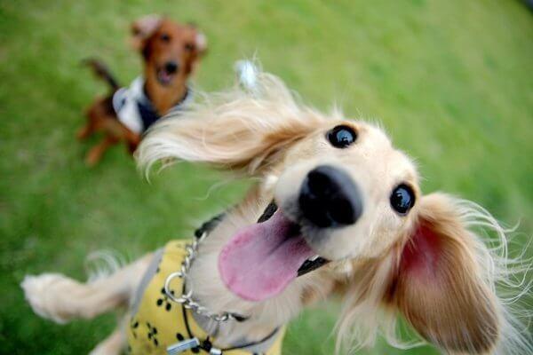 いつもテンションが高すぎる愛犬を落ち着かせたい!