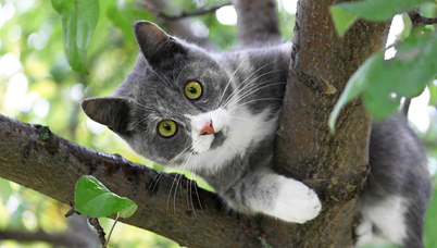cat-with-green-eyes