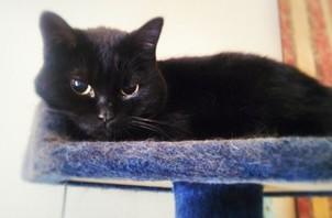 黒猫さん🐈🐾