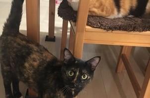 姉妹猫ちゃんのペットシッター