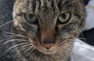 保護猫さん^-∞-^⑤ 【岩沼 ペットシッター】