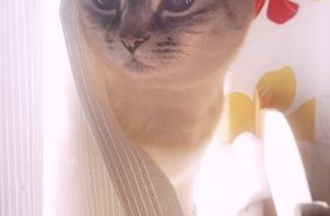 光と猫さん(^・w・^) 【岩沼 ペットシッター】